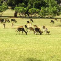 Brioni safari park